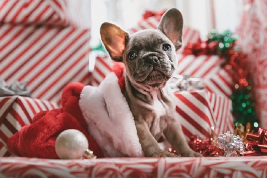 Cute merry christmas dog wallpapers